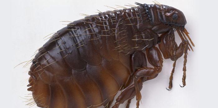 pestcontrol-thegap